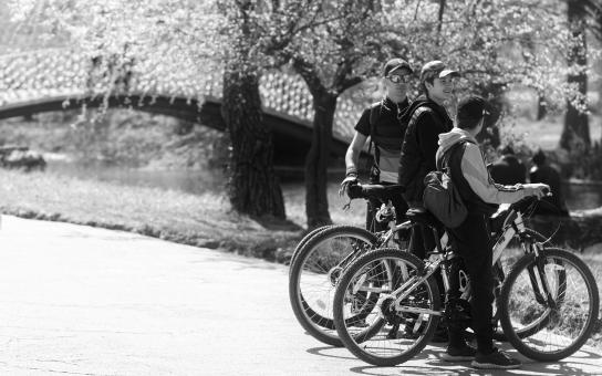 Free Stock Photo of Bicyclists in the Park