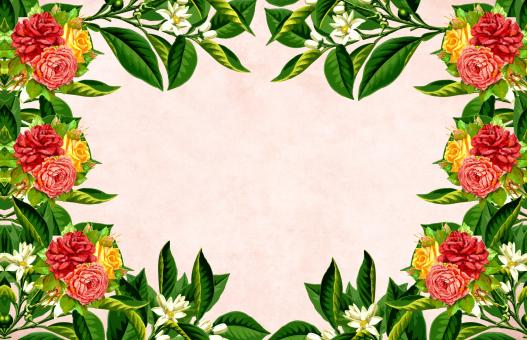 Free Stock Photo of Flower Frame Background