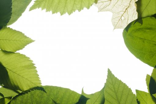 Free Stock Photo of Green leaves frame