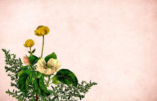 Free Stock Photo of Yellow Flower on Vintage Paper Background