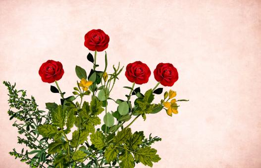 Free Stock Photo of Red Roses on Vintage Background