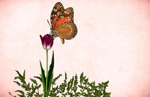 Free Stock Photo of Vintage Flower and Butterfly