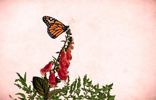 Free Stock Photo of Flower and Butterfly on Paper Background