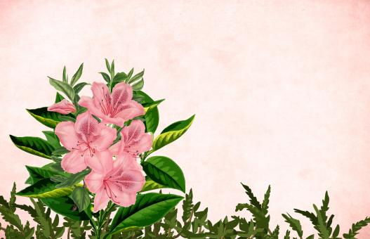 Free Stock Photo of Pink flower vintage background