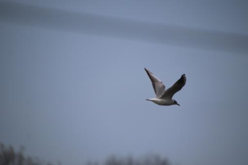 Free Stock Photo of Seagull flying away