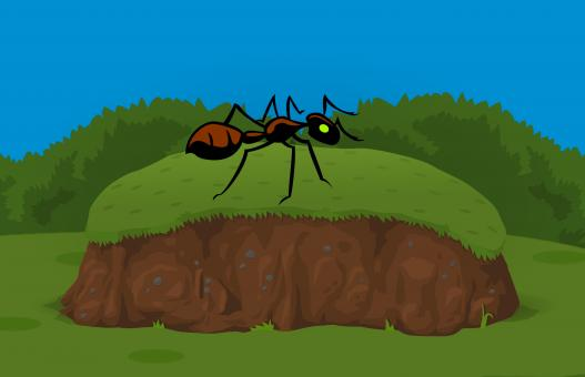Free Stock Photo of Ant in Garden