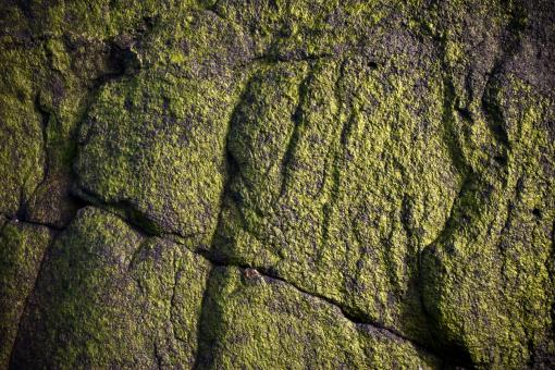Free Stock Photo of Green Slimy Stone Surface