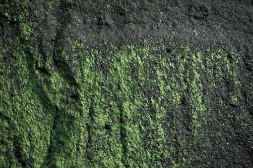 Free Stock Photo of Green Slimy Rock Surface