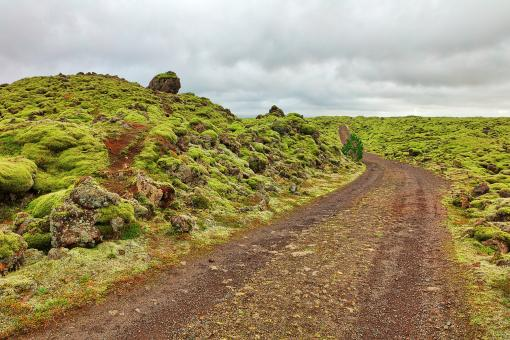 Free Stock Photo of Rugged Iceland Moss Trail