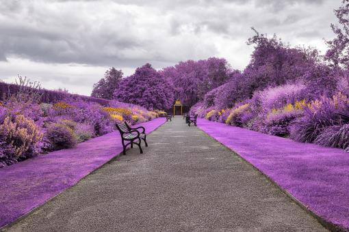 Free Stock Photo of Belfast Botanic Gardens - Purple Fantasy