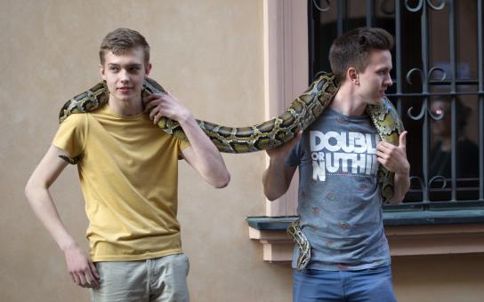 Free Stock Photo of Boys with a Python