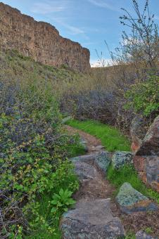 Free Stock Photo of Box Canyon Spring Trail