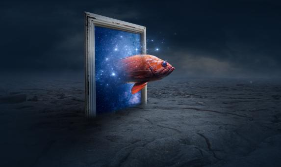 Free Stock Photo of Fish Coming Through Frame - Fantasy