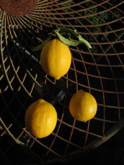 Free Stock Photo of Three lemons on a mesh table