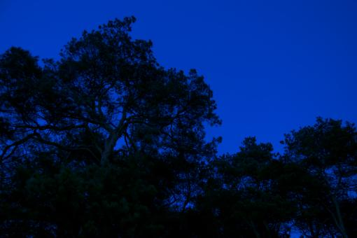 Free Stock Photo of Night Forest on the Background of Blue Sky