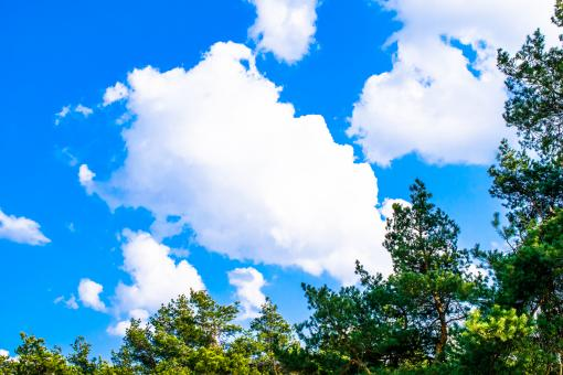 Free Stock Photo of Green Trees Against the Blue Sky