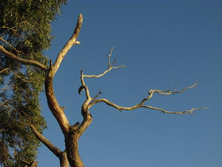 Free Stock Photo of Dead Tree with Abstract Branches