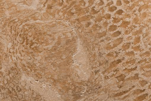 Free Stock Photo of Coral Fossil Texture