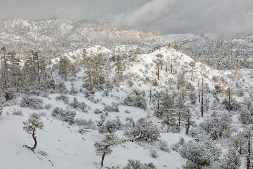 Free Stock Photo of Bryce Canyon Winter Wonderland