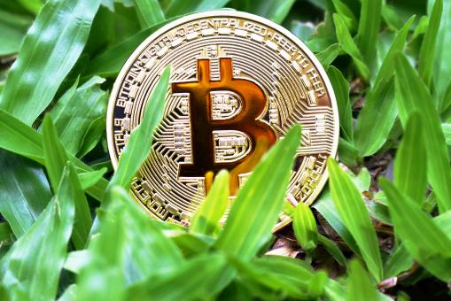 Free Stock Photo of Bitcoin in Grass