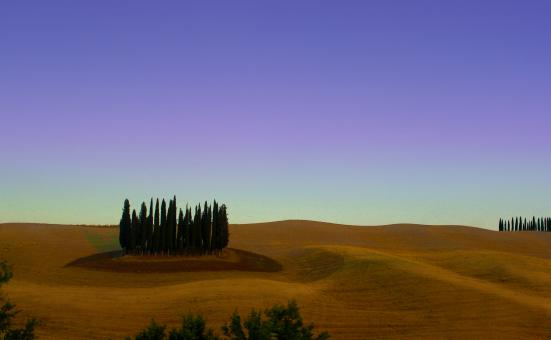 Free Stock Photo of Cypress Trees - Typical Landscape of Tuscany