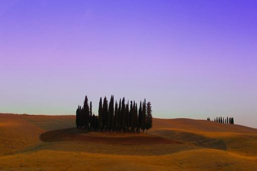 Free Stock Photo of Typical Cypress Trees - Val d Orcia - Tuscany - Italy