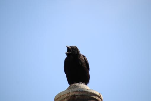 Free Stock Photo of In memory of the Unknown Crow