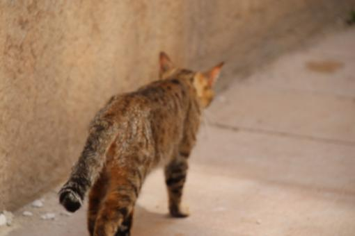 Free Stock Photo of Cat walking away