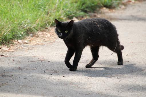 Free Stock Photo of Black cats, bad luck??!! My foot!