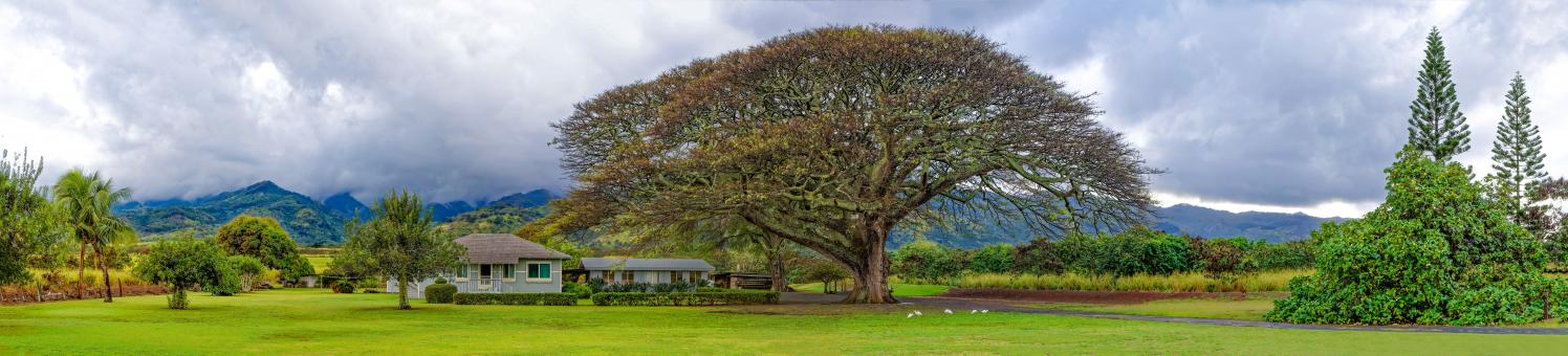 Free Stock Photo of Large Tree Over a House - Panorama