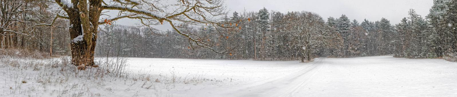 Free Stock Photo of Winter Panorama