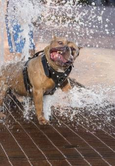 Free Stock Photo of Dog playing with water