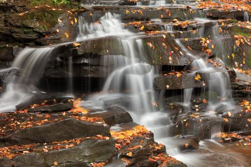 Free Stock Photo of Autumn Garden Creek Cascades