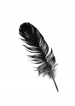 Free Stock Photo of Black Feather Illustration