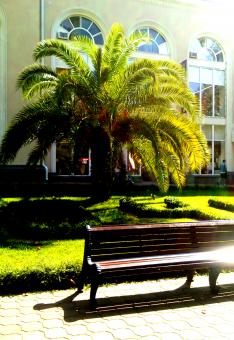 Free Stock Photo of Palm and bench