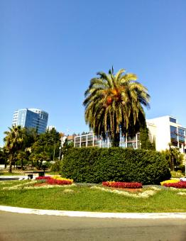 Free Stock Photo of Palm, flowerbed and modern buildings