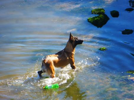 Free Stock Photo of Dog swimming in the river