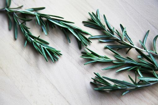Free Stock Photo of Rosemary Herbs