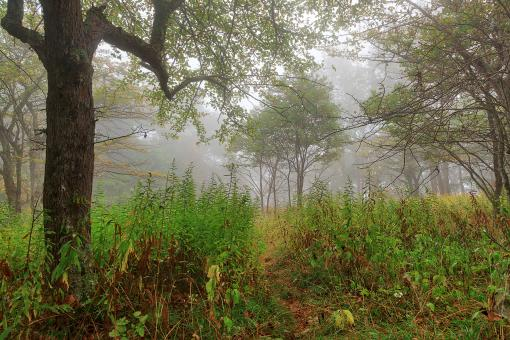Free Stock Photo of Ominous Mist Forest - Spruce Knob