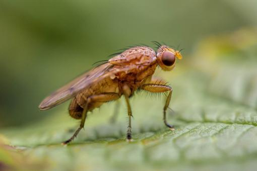 Free Stock Photo of Marsh Fly