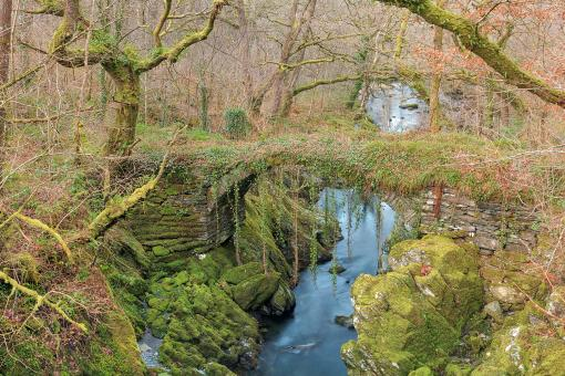 Free Stock Photo of Ancient Moss Forest Bridge