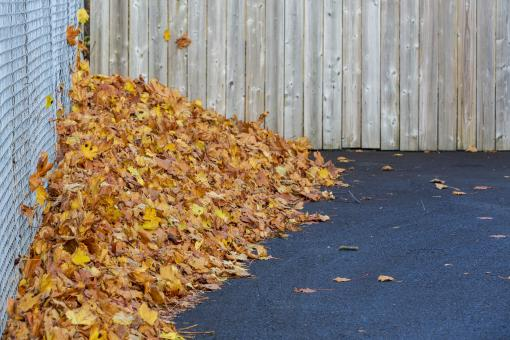 Free Stock Photo of Pile of Autumn Leaves