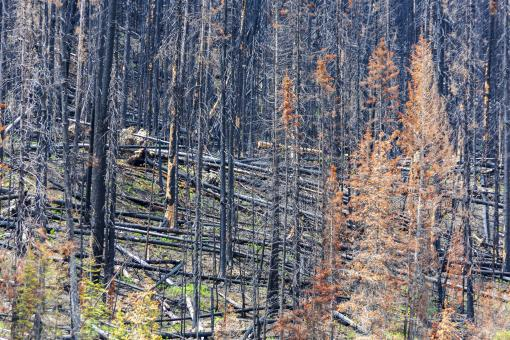 Free Stock Photo of Forest fire damage