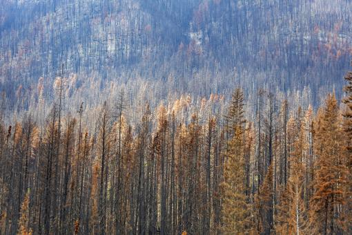 Free Stock Photo of Damages by Forest Fire