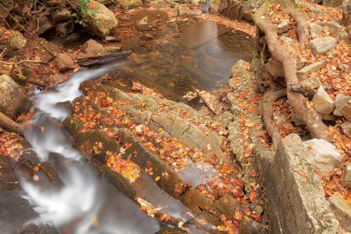 Free Stock Photo of Autumn Gee Creek Bend