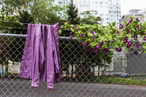 Free Stock Photo of Purple Shirt on a Fence
