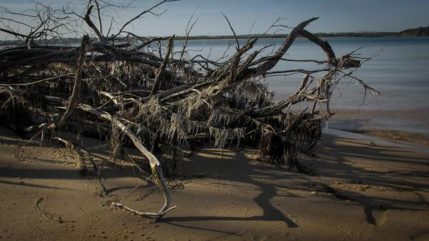 Free Stock Photo of Dead Tree on the Beach