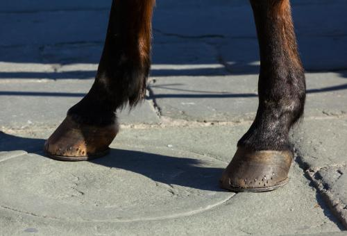 Free Stock Photo of Horse hooves on the flagstones