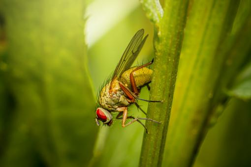 Free Stock Photo of Red Eyed Fly