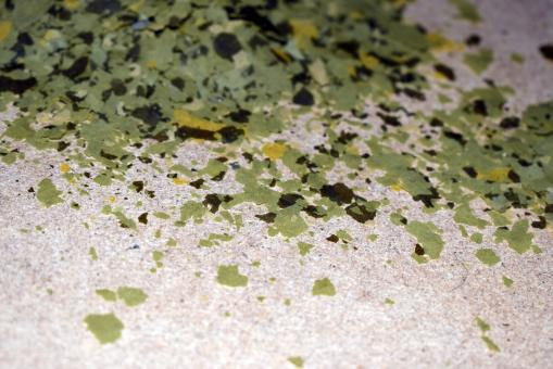 Free Stock Photo of Green flakes